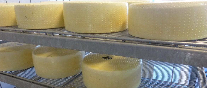 Direktvermarkter lassen Ihren Käse bei Georg Wimmer produzieren.