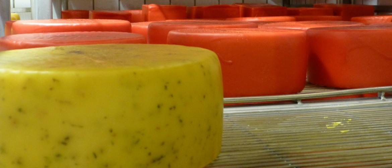 Fragen bei der Käsepflege Georg Wimmer kontaktieren.